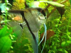 Аквариум уход за рыбками гуппи в аквариуме